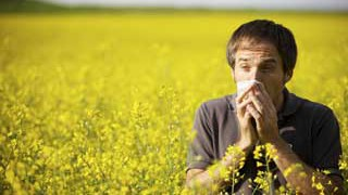 FEATURED-Homeopathy-Highly-Effective-for-Hay-Fever