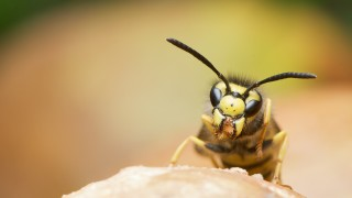 wasp anxiety herpes Healthy Homeopathy
